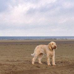 Beachwatch