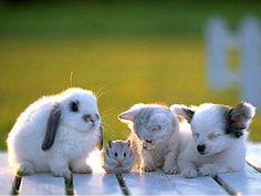 baby+animals+friendships | Animal Friends Wallpaper Vjqr /