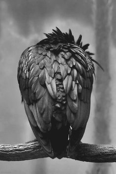 "A.W.E.S.O.M.E.!!! What a Great Perspective and I wish I knew who the Artist was!!! Not even sure this is ""Corvidae"" but **love** it anyways!! :)"