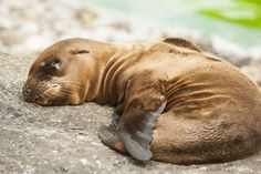 Daily Cuteness – 10 Newborn Animals