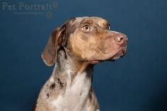 Hondenfotograaf Amsterdam - PetPlan Winner actie - Honden op de Winnershow-4