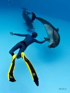 Freediver and Dolphins.