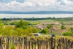 Wine Country, How Beautiful, Countryside, Vineyard, Bottles, Marvel, Tours, Landscape, City