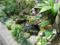 City of Ryde Spring Garden Competition 2012. #Garden #Gardens #Gardening #GreenThumb #Spring #Flowers #Flora #Trees #Shrubs #Cactus #Succulents #Ryde #CityofRyde