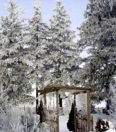 The garden in winter.