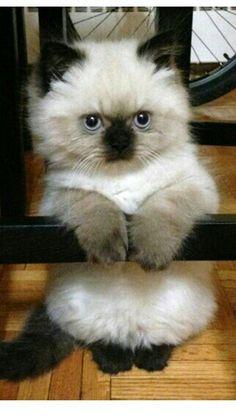 Cutest animal I've ever seen!