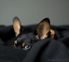 Leeloo <3