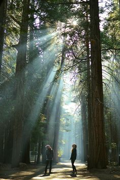 dappled sunlight...I've been trying for years to get a photo like this where you can visibly see the rays of sun