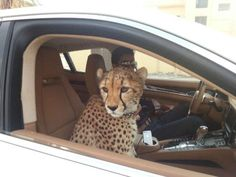 Nice Exotic cars 2017: Wow, it's like another planet!...  hadi love pinterest Check more at http://autoboard.pro/2017/2017/04/19/exotic-cars-2017-wow-its-like-another-planet-hadi-love-pinterest/