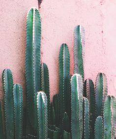 Blush + Desert Greenery