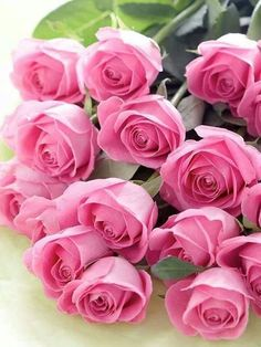 Pink Roses ♥♥