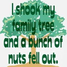 I shook my family tree