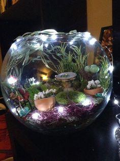 superbes terrariums
