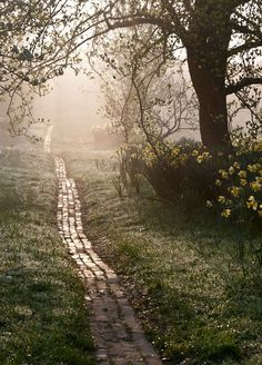 Carol Casselden: Orchard Path at Sunrise. 3rd Place, Beautiful Gardens.