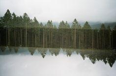 One, two, tree   by iampaulrus