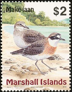 Lesser Sand Plover stamps - mainly images - gallery format
