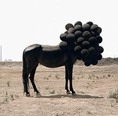 Photograph by Andrea Galvani of black horse with head covered by black balloons. Horse Balloons, Black Balloons, Surrealism Photography, Art Photography, Balloons Photography, Contemporary Photography, Contemporary Art, Instalation Art, Art Gallery