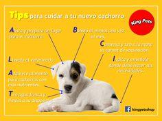 Tips para cuidar a tu nuevo cachorro #Kingpets #cachorros