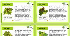Minikartei Faltheft_Laubbäume.pdf