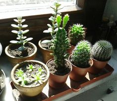 a tallll cactus Cacti And Succulents, Planting Succulents, Cactus Plants, Planting Flowers, Echeveria, Indoor Gardening Supplies, Plant Aesthetic, Plants Are Friends, Cactus Y Suculentas