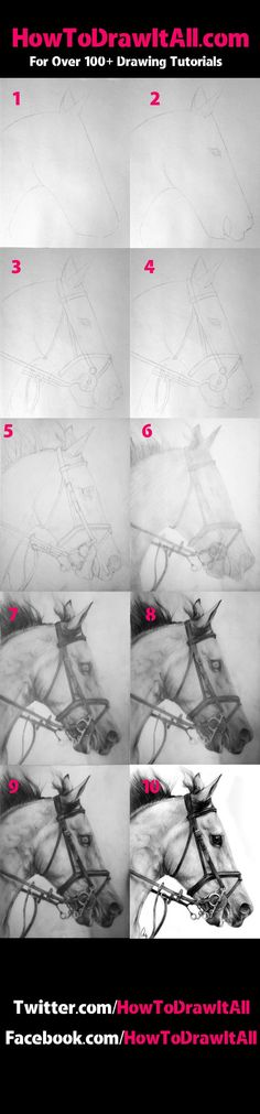drawing a horse step by step