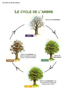1 LE CYCLE DEL ARBRE