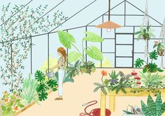 Dibujo invernadero dibujo plantas dibujo botánico