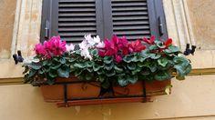 window flowerbox in Rome Italy  http://www.just-commerce.net