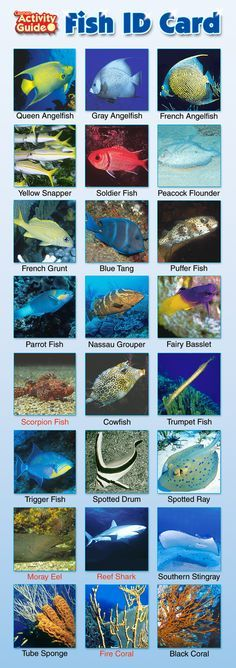 Cayman Islands Fish ID Card | Cayman Fish Identification Pictures Names Species