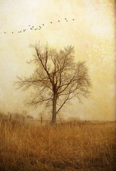 32 Best Poem Backgrounds Images Autumn Leaves Nature