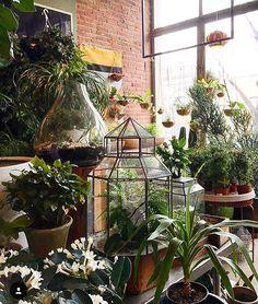 At work  #elegance #inspiration #instaflower #instagarden #fleurs #flowers #fiori #jardin #gardens #giardini #serra #greenhouse #green #chic #colours #verde #blooms #natural #myidea #mystyle #mygarden #my #marinacanazzad #