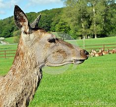 Deer Close Up - Download From Over 48 Million High Quality Stock Photos, Images, Vectors. Sign up for FREE today. Image: 41505394