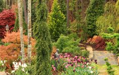 Japanese Maples & Conifers