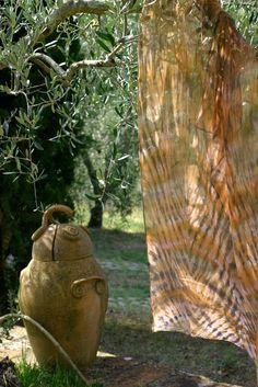 am Olivenbaum
