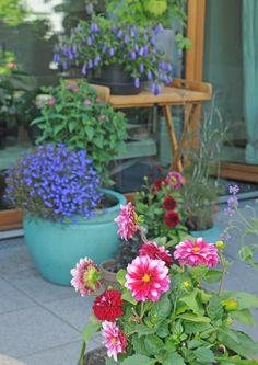 balkonkasten bepflanzung mit immergr nen koniferen und sommerblumen balkonpflanzen pinterest. Black Bedroom Furniture Sets. Home Design Ideas