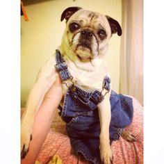 Pug Overalls