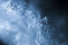 snowflake by tamotsu matsui on 500px