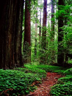 from outdoor sanctuaries ...walking among trees is one of the most peaceful things to do