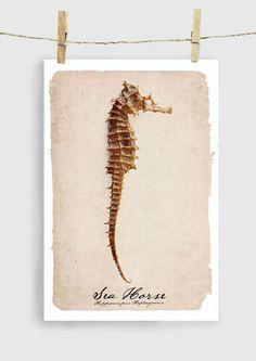 dream horse, sea horse