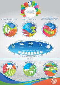 La FAO acumula décadas de experiencia en la promoción de prácticas y políticas agrícolas que protegen la base de recursos naturales para las gene