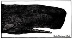Moby Dick, or the Whale illustrated by Barry Moser