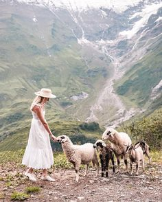 Sheep in the mountains.