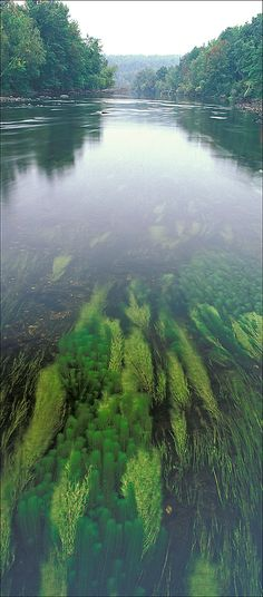 It looks like the tropical forests in a water bowl...Millers river