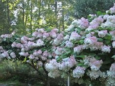 Syyshortensia Garden Plants, Patio, Vegetables, Flowers, Trees, Decor, Decoration, Tree Structure, Vegetable Recipes