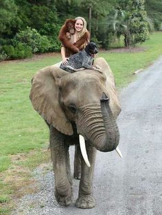"Best friends, Surya the orangutan and Roscoe the Blue Tick hound dog, were recently featured on National Geographic. The orangutan was out for his daily elephant ride when he spotted ""a worn-out … Photo Elephant, Elephant Love, Amor Animal, Mundo Animal, Animals And Pets, Baby Animals, Cute Animals, Beautiful Creatures, Animals Beautiful"