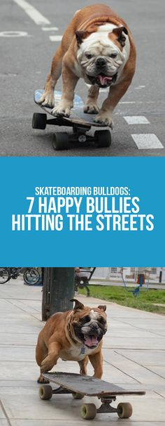 Keep the fun with the skate bullies from Instagram   #bulldogs #pets #dogs #skateboarding #bullies #funny #fun #animals