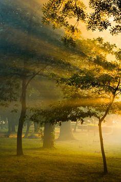 {unknown sunlight}