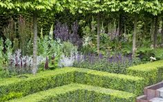 The Husqvarna Garden by Charlie Albone at the RHS Chelsea Flower Show 2016