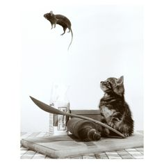 Art.com - Cat and Mouse Art Print, White Black