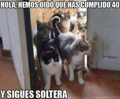 jajajajajaja Que tengan un buen fin de semana Amigales!!! Haz click aquí → http://www.amigales.cl/ #humor #animales #catlover #gatos